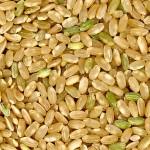 El salvado de arroz mejora la salud cardiovascular y previene la obesidad