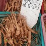 Ginseng puede reducir fatiga por cáncer