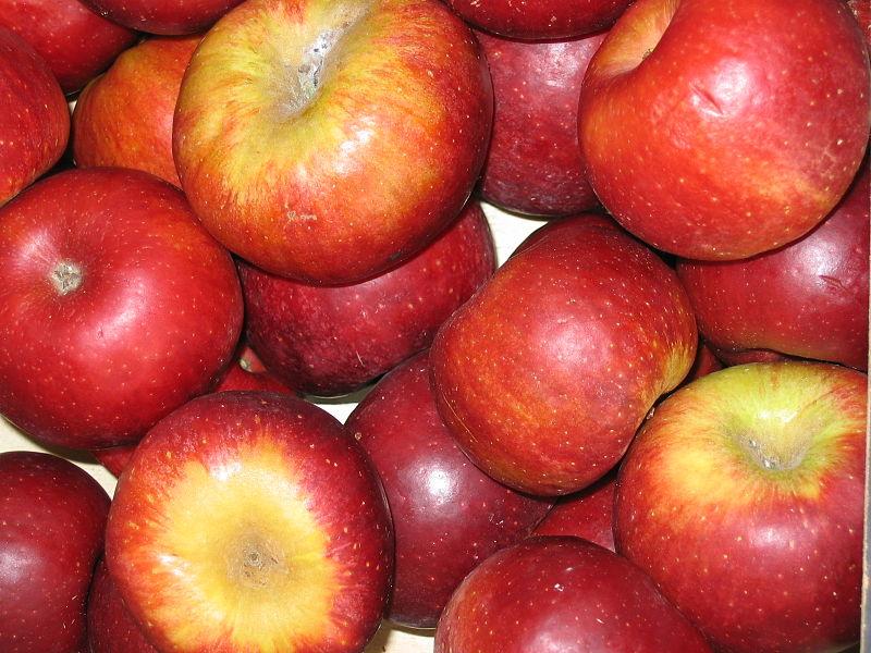 Manzana variedad red winter. Foto P. Lamero (licencia CC)