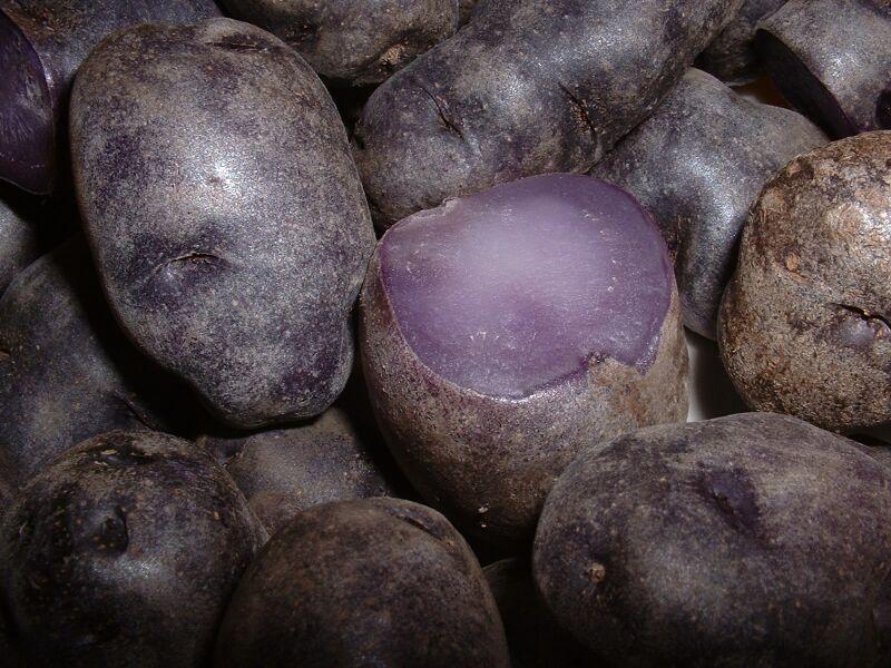 Tubérculos de una variedad peruana de papa con piel y pulpa de color púrpura