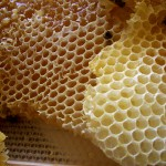 Efecto antibiótico local de la miel