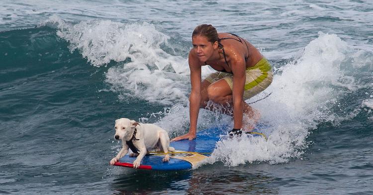 Perro-surf-Frank Kovalchek