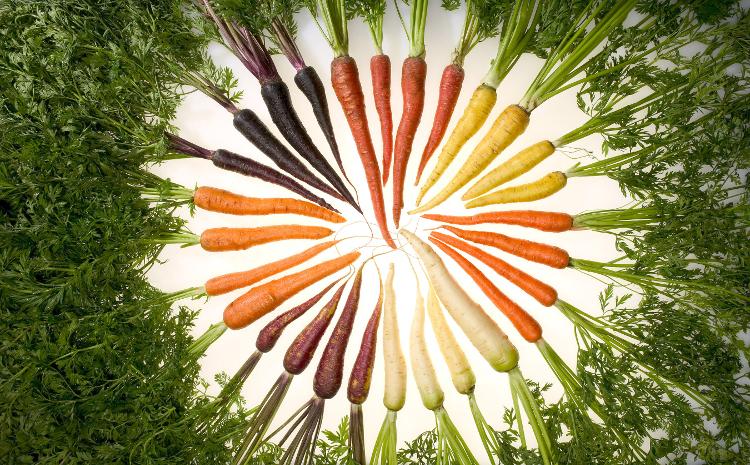 Diferentes tipos de zanahorias. Foto: Stephen Ausmus (licencia CC)